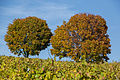 Weininsel 2014 17.jpg
