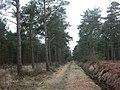 West Moors Plantation - geograph.org.uk - 1640545.jpg