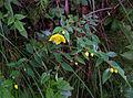 Whf yellow 31.jpg