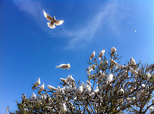 White Doves at the Blue Mosque (5778806606).jpg