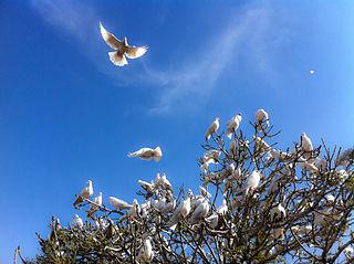 Doves as symbols