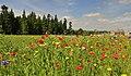 Wild Flowers Lowther Castle - panoramio.jpg