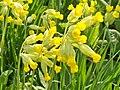 Wild flowers near Khotyn Fortress (Ukraine) (26101187113).jpg