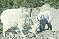 Wildlife55 (27299258099).jpg