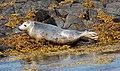 Wildlife on the Isle of May (2) - geograph.org.uk - 1345166.jpg