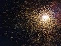 Winged termites swarming IMG 20201021 191840.jpg