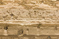 Wingertsbergwand-mendig-9340.jpg