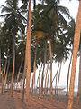 Winneba Beach, Ghana-12.jpg