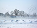 Winter 2011-2012 pavlodar.jpg
