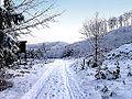 Winter im Teutoburger Wald15.jpg