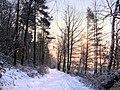 Winter im Teutoburger Wald23.jpg