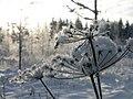 Winter morning in Lēdmane - panoramio - Paul Berzinn (1).jpg