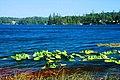 Woahink Lake (Lane County, Oregon scenic images) (lanDA0172).jpg