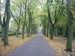 Lindenallee in Worpswede