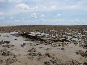 Wreckage of N5-140 off the Nightcliff Foreshore (1).jpg