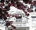 Wuppertal, Farbmühle 2, Balkon, umsäumt von Kirschblütenzweigen.jpg