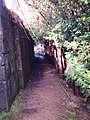 Yew Lined Path - geograph.org.uk - 717448.jpg