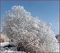(((عکس زمستانی از مناظر کناره های صوفی چای ))) - panoramio.jpg