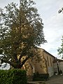 Église Saint-Barthélémy de Monferran - Côté sud.jpg
