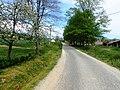 Žućin put (put prema crkvi Osova) - panoramio.jpg