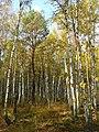 Березово-сосновий-трясучковидноосоковий ліс в заказнику Мисловичі.jpg