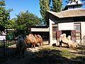 Верблюди Зоологічний парк.jpg