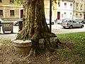 Дерево и кадка (27112549278).jpg