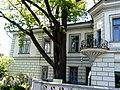 Дуб черешчатий Будинок вчених Харків.jpg
