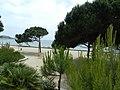 Загадочная южная растительность-3 - panoramio.jpg