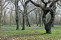 Знаменский парк - 2.jpg
