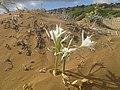 И на барханах растут цветы - panoramio.jpg
