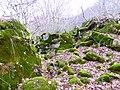 Каменный хаос на северном склоне горы Стрижамент.jpg