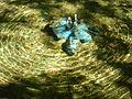 Круги на воде - panoramio (1).jpg