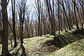 Лісний пейзаж.jpg