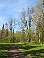 Ораниенбаум, Верхний парк, Английская аллея03.jpg