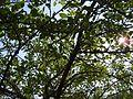 Питомник яблочный - panoramio.jpg