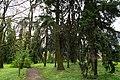Сирецький дендрологічний парк 11.jpg