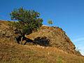 Скелі МоДРу - шовковиця.JPG