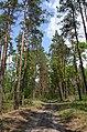 Сосново-дубові насадження, Пісківка 02.jpg