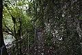 Тисо-самшитовая роща. Тропа вдоль скалы.jpg