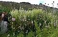 Флора 01, резерват Бистришко бранище.JPG