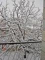 یک روز برفی - الیگودرز - panoramio.jpg
