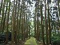 加瀬沼公園 北大垣跡への道 Kasenuma Park, path to Tagajō north wall remains - panoramio.jpg