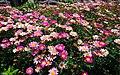 双廊的花 - panoramio.jpg