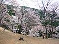 吉野山 奥の千本 Oku-no-sembon 2011.4.26 - panoramio (1).jpg