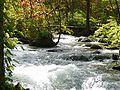 奧入瀨川 Oirase Creek - panoramio (1).jpg