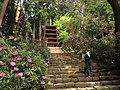 室生寺の五重塔.jpg