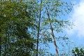 新丰司茅坪林场20150412 - panoramio (6).jpg