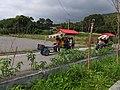 鐵牛車之旅 Tractor car tour - panoramio.jpg