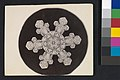 -Snow Crystal- MET DP351919.jpg
